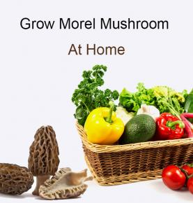 grow morel mushroom at home